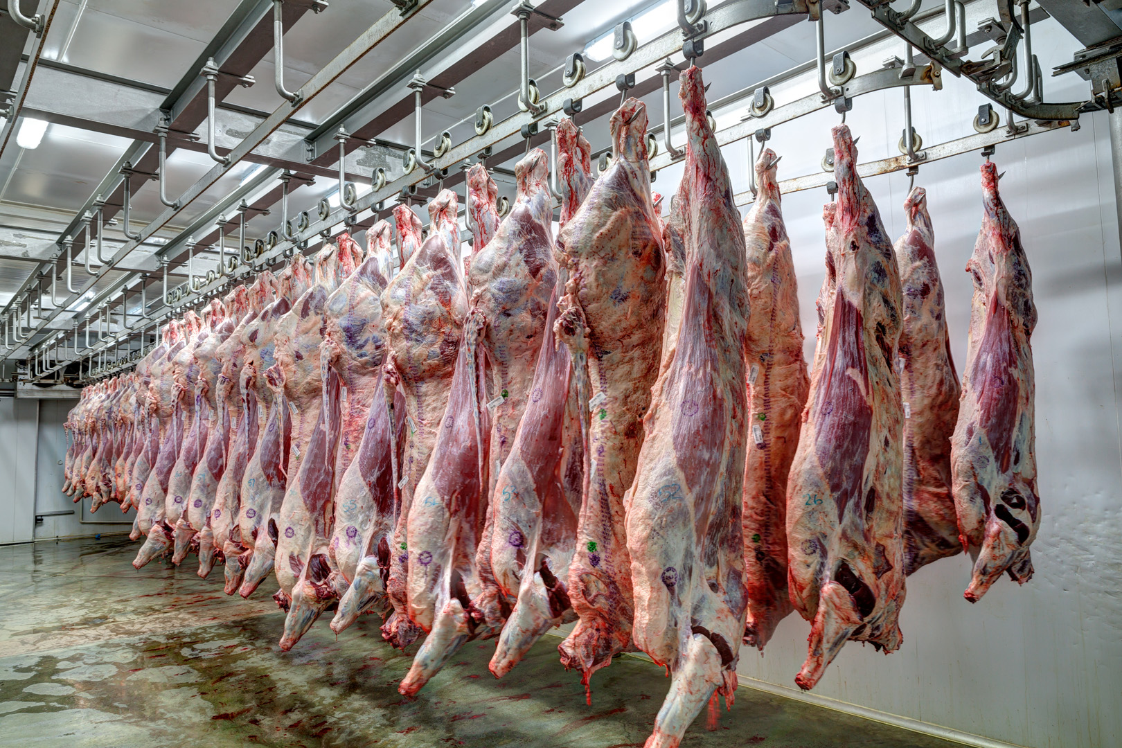 Image result for Abattoir
